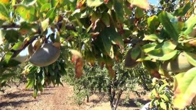 Badem üretiminde teknolojik tarım