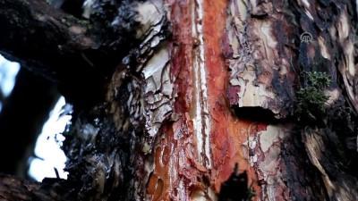 Ormanlık alana yıldırım düştü - BOLU