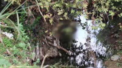Derede erkek cesedi bulundu - YALOVA