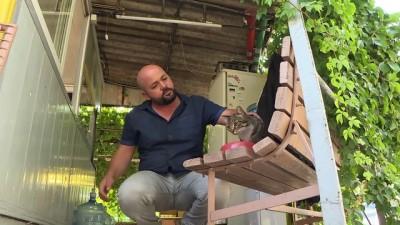 Kedi Hürrem tedavi edildiği taksi durağının maskotu oldu - İZMİR