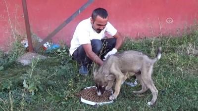 Ayakları tutmayan yavru köpek tedaviyle sağlığına kavuştu - HAKKARİ