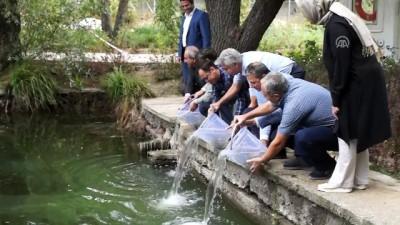 Karagöl'e 5 bin abant alası bırakıldı - ANKARA