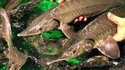 Yaşayan fosilleri nehirlere döndürmek