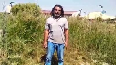 Erciş'te kuş ölümleri hayvanseverleri tedirgin etti