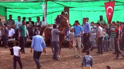 Hasköy'de mahalli at yarışları - MUŞ