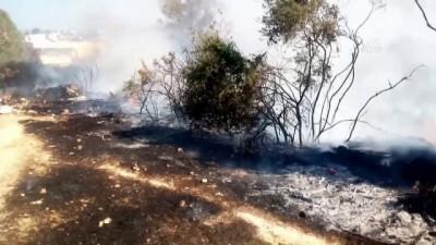 Aydın'da ormanlık alan yandı