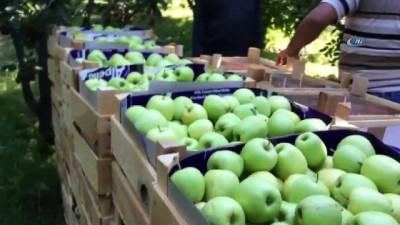 'Elmanın Başkenti' Eğirdir'de 300 bin ton üzeri rekolte beklentisi