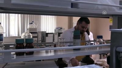 Fındık atıklarından kemoterapi ilacı etken maddesi - DÜZCE