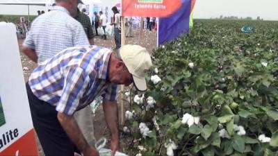 MAY Tohum yeni pamuk çeşitlerini 'Bereket Şenliği'nde çiftçilere tanıttı