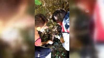 Tellere takılan yavru köpek kurtarıldı - ZONGULDAK