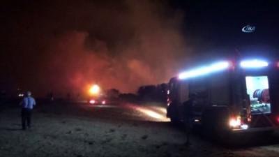 Didim'deki yangında 200 dekarlık alan kül oldu