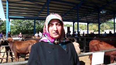 Erzincan'da genç çiftçilere büyükbaş hayvan dağıtımı yapıldı