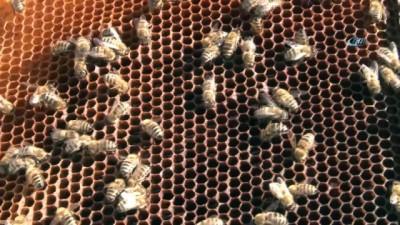 İklim değişikliği arıları etkiledi, bal üretimi 5 kata yakın düştü