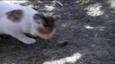Kedi fareyle böyle oynadı