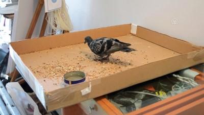 Lüleburgaz'da güvercinle esnafın dostluğu - KIRKLARELİ