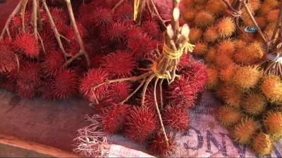 "- Tanzanya'nın asil meyvesi ""Rambutan"" - Tanzanya'nın asil meyvesi Antalya'da da yetiştiriliyor"