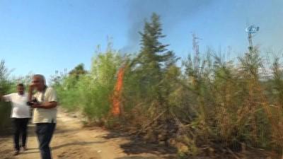 yangina mudahale -  Sorgun Çamlığında orman yangını