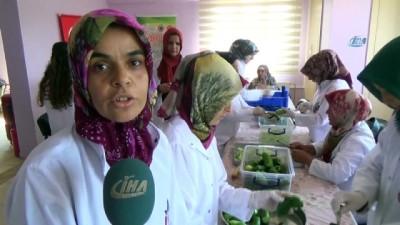 Gastronomi Kenti Hatay'da dolmalık ve turşuluk salatalıklar kışa hazırlanıyor