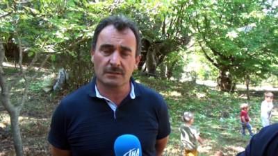 Sinop'ta kestane hasadı başladı