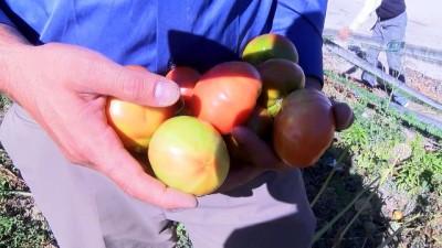 ogrenciler -  Bu bahçenin ürünleri öğrenciler için yetiştiriliyor Haberi