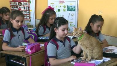 ogrenciler - Kedi 'Tombi' yaz tatilinin ardından okula döndü - İZMİR Haberi