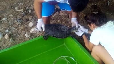 bild - Deniz kaplumbağasına kalp masajı ve suni solunum - MUĞLA