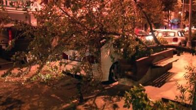 mel b -  Şiddetli rüzgar, ağacı lüks otomobilin üstüne devirdi