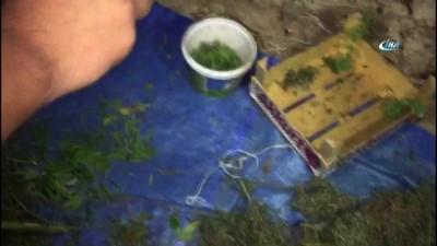 Artvin'de uyuşturucu operasyonu: 21 kilo esrar ile 20 kök kenevir ele geçirildi