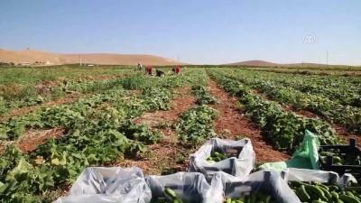 Gübrede indirim ve prim desteği çiftçiyi sevindirdi - ŞANLIURFA