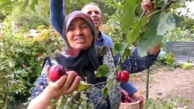 hanli -  İçi de dışı gibi kırmızı elmaya coğrafi işaret çalışmaları