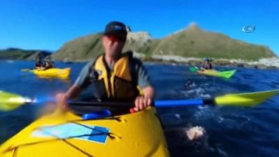 - Yeni Zelanda'da Fok Balığının Şok Hareketi