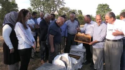 """'Toplu arı ölümleri"""" üreticileri endişelendirdi - BİNGÖL"""