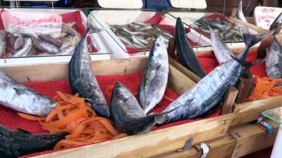 Batı Karadenizli balıkçılar palamutla sevindi - ZONGULDAK