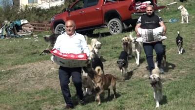 mobilya -  Hayvansever Erol Şahin sokak köpeklerine sahip çıktı