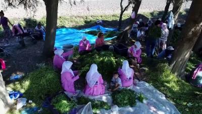 Moringayla markalaşıp pazara açıldılar - GAZİANTEP