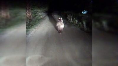 Önüne çıkan ayıyı ormana kadar böyle kovaladı