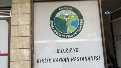 Bursa Damızlık Koyun ve Keçi Yetiştiricileri Birliği Başkanı Yıldırım Oran:'Şarbon hastalığının bir çok noktada görülmesi Türkiye üzerinde bir operasyon ihtimalini akla getiriyor'