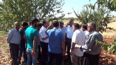 Badem diyarı Adıyaman'da hasat sürüyor - ADIYAMAN
