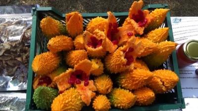 Düzce'de tıbbi ve aromatik bitkilerin hasadı yapılıyor