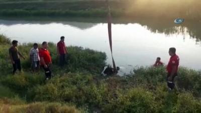 kanald -  - Sulama kanalına düşen inek vinçle kurtarıldı