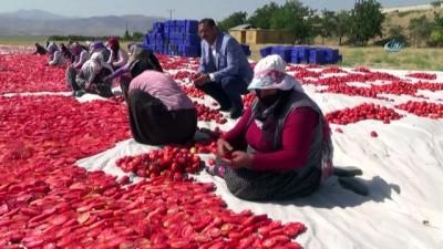 Tonlarca domates, kurutulup dünyaya satılıyor