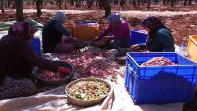 Türkiye ile İran Antep fıstığı için ortak proje üretecek - GAZİANTEP