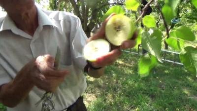 Akdeniz Sineği hastalığı Niğde'ye sıçradı, meyve üreticileri bahçelerinde yüzde 80 kayıp olduğunu söyledi