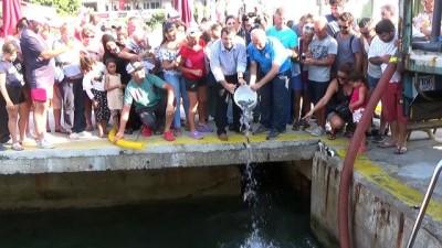 Bodrum'da 35 bin levrek yavrusu denize bırakıldı - MUĞLA