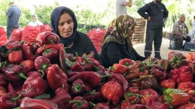 argo - Gastronomi şehrinde 'acı' telaş - GAZİANTEP