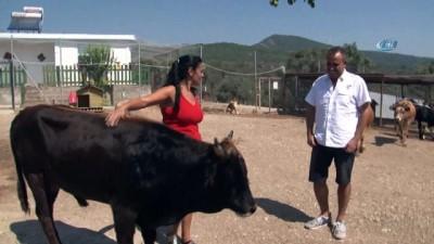 Haluk Levent, Rize'den Trabzon'a kadar yüzen dana Ferdinand'ı ziyaret etti