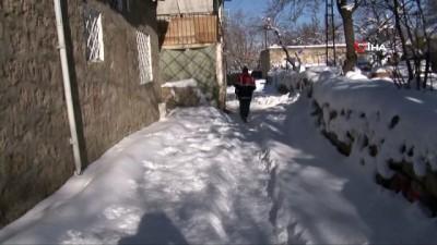 Köpek saldırısının yaşandığı ilçede köpekleri toplama çalışmaları sürüyor