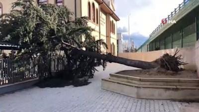 mel b -  Lodos okul bahçesindeki ağacı devirdi