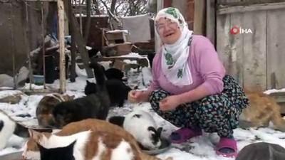 Nuriye Teyze, üşümesinler diye 58 kediye evinde bakıyor