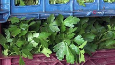 sili -  'Antalya halinde 5 liranın altında sebze yok'